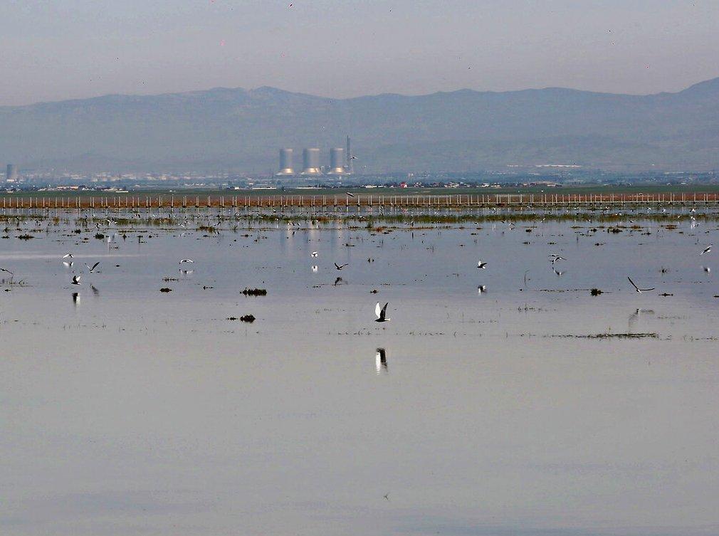 تالاب الله آباد آماده میزبانی از پرندگان مهاجر است