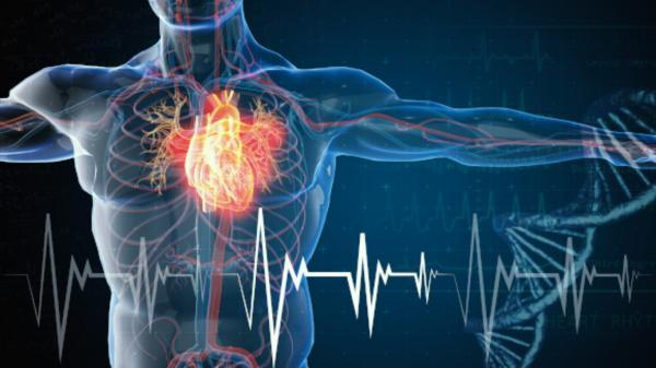 فراوری انرژی الکتریکی برای بدن انسان